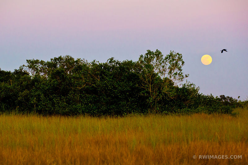 PRAIRIE AND THE MOON SHARK VALLEY EVERGLADES NATIONAL PARK FLORIDA