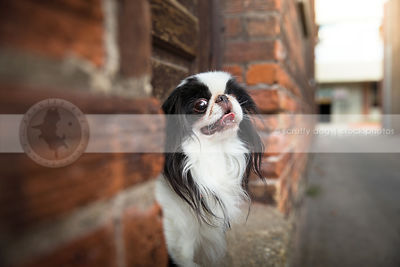 small white and black dog in doorway of urban alley