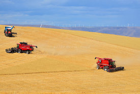 Case_combines_cutting_wheat_eastern_Oregon