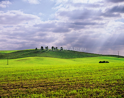 The vast plains of Alentejo, in Spring. Portugal