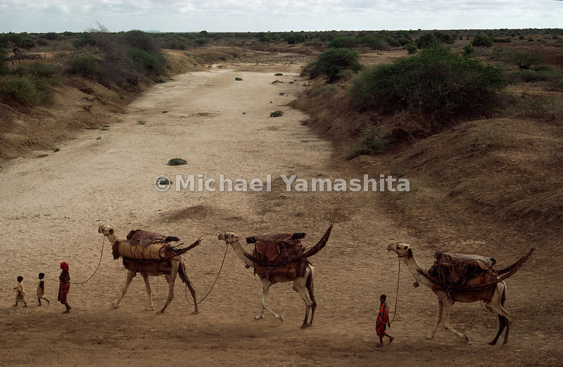 Endless quest for pasture and water defines the life still adhered to by most Somalis, such as this family crossing a dry riverbed near Bur Acaba. Symbols of wealth and status, and never ridden except by the sick, camels carry disassembled huts and their supplies.