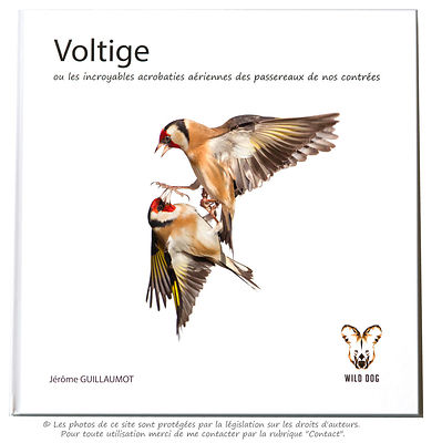 Voltige (Bird Action photos on White background) photos
