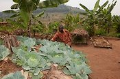 Farmer working his Keyhole Garden growing various vegetable crops. Rwanda