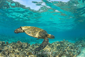 SEA TURTLE 3: Navigating the Warm Waters