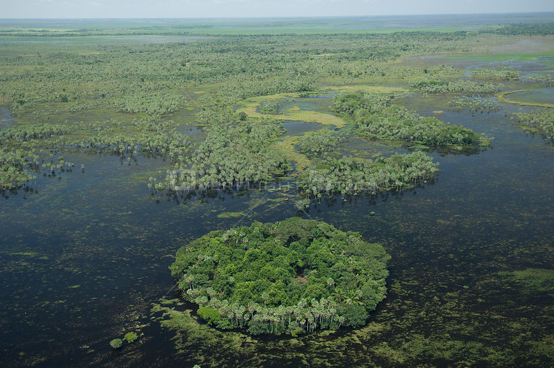 "Aerial view of an island of vegetation and ""Caranday"" palm trees (Copernicia alba) in the floodplain of the Beni, during the 2008 great flood of Mamoré River, North of Trinidad city, the capital of the Beni Department, Eastern Bolivia."