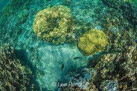 Corals in the Kapoho Tide Pools off Big Island of Hawaii