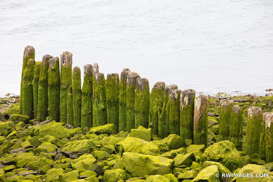 MOSSY WOODEN FENCE LA PUSH WASHINGTON COLOR