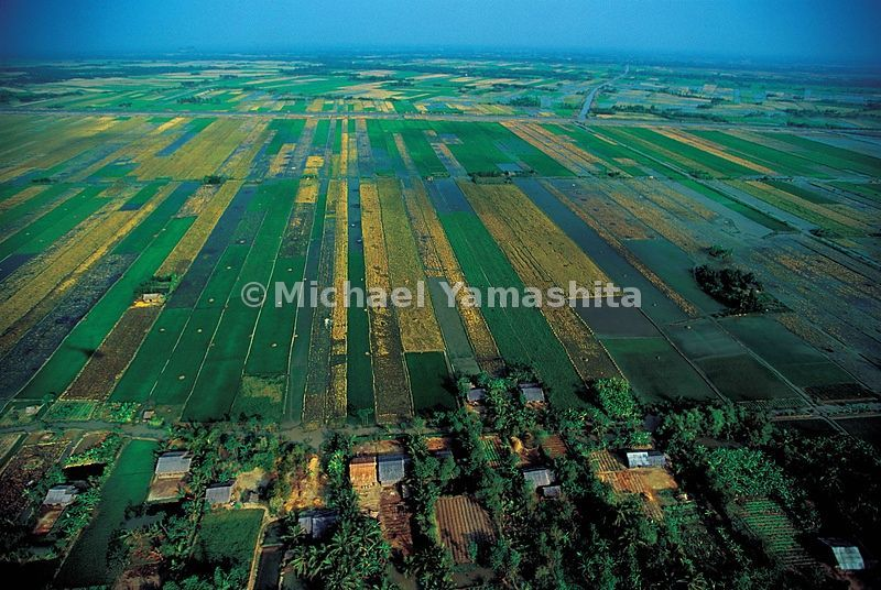 The Mekong Delta is Vietnam's rice bowl.