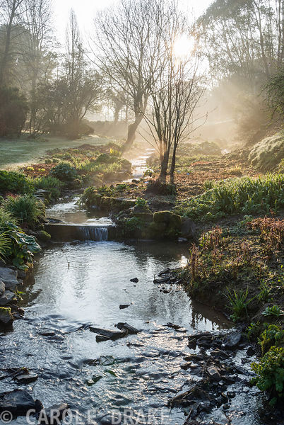 Early morning sun illuminates the stream that links a sequence of large ponds, edged with moisture loving plants including astilbes, ligularias and Lysichiton americanus. Marwood Hill Gardens, Barnstaple, Devon, UK