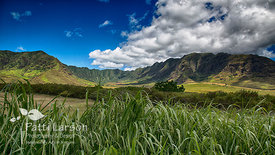 Mountain View on Western Oahu