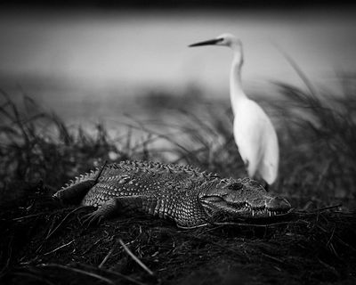 Crawl or fly, Botswana 2009 © Laurent Baheux