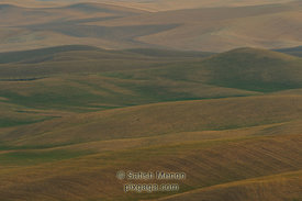 Wheat Fields, Palouse Region, Washington, USA