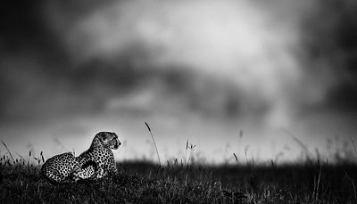 Cheetah before the rain, Kenya 2006 © Laurent Baheux