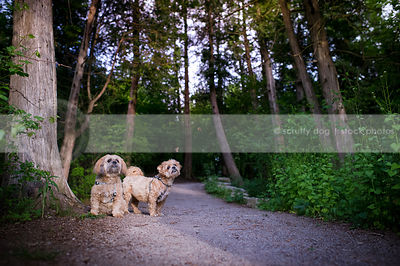two cute little tan dogs on forest path with butterflies in summer