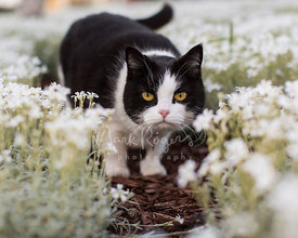 Unhappy Looking Cat with Yellow Eyes in Flowers
