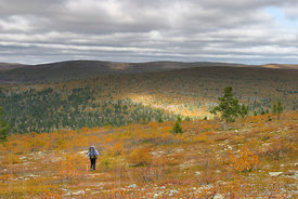 Hiker on a fell in autumn colors