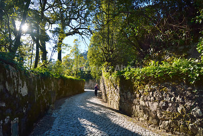 An old way in the Unesco protected forest of São Pedro de Sintra, a UNESCO world heritage site. Sintra, Portugal (MR)