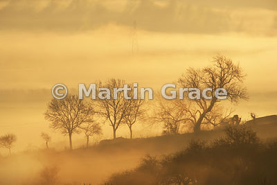 Misty Lyth Valley sunrise, trees with pylon, December, Cumbria, England