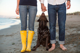 Chocolate labrador retriever between couple holding hands on a beach