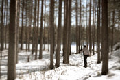 Woman with snowshoes hiking in winter forest
