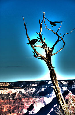 Ravens_Grand_Canyon_surreal