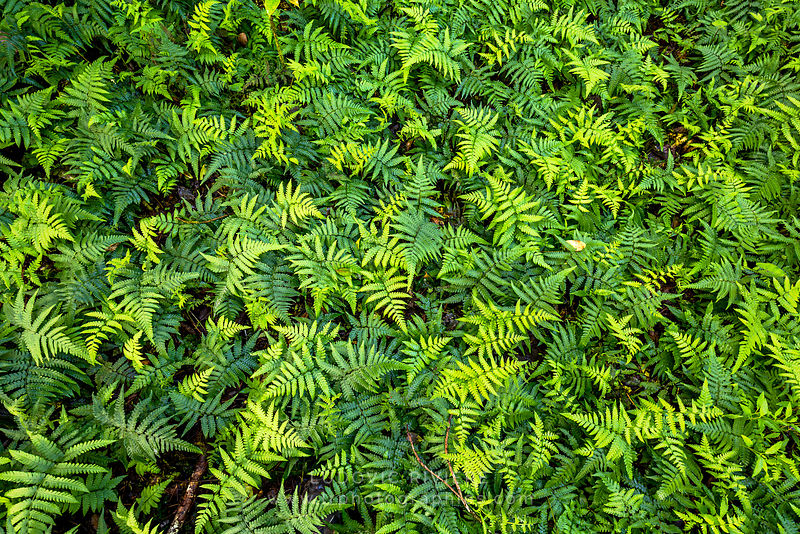 Fern carpet