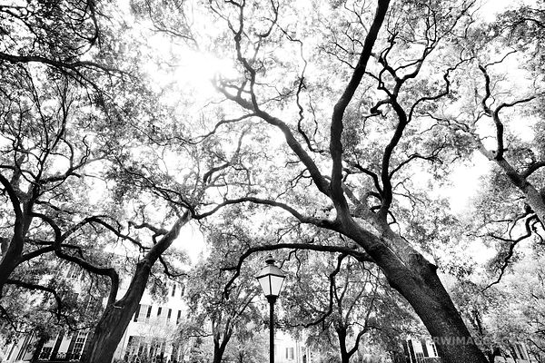 PULASKI SQUARE SAVANNAH GEORGIA BLACK AND WHITE