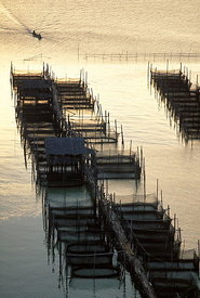 Fish farms Songkhla