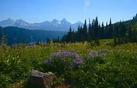 Meadow on Mt. Rainier