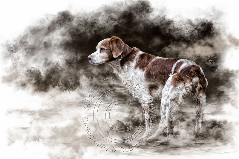 Art-Digital-Alain-Thimmesch-Chien-77