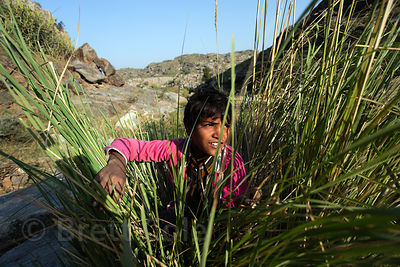 Goat herding boy hiding in tall grass along a creek, near Ajaysar village, Rajasthan, India
