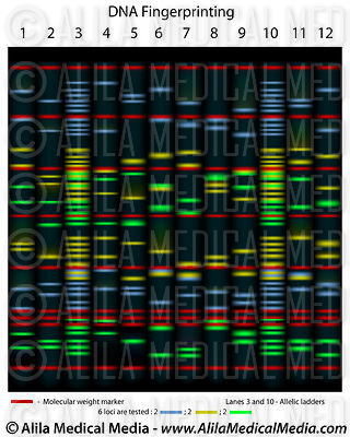 Medical Genetics Images & Videos images