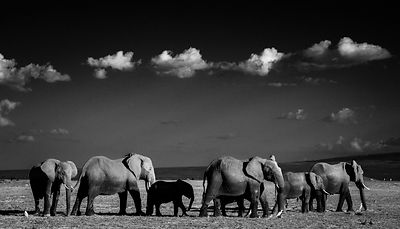 0902-Elephant-In_the_shade_of_the_giants_Kenya_2015_Laurent_Baheux
