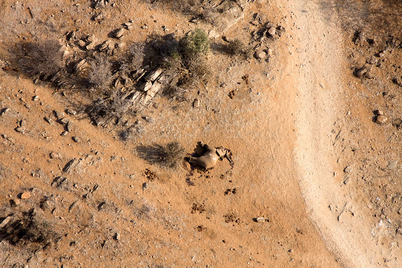 Aerial of dead elephant most likely the result of the worst drought (2008-2009) in more than a decade in Northern Kenya. August 2009.