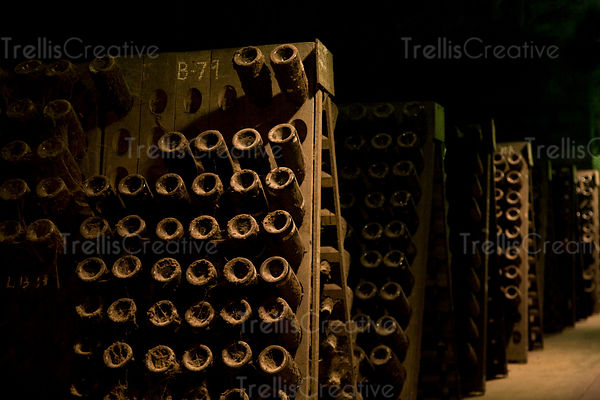 Rows of champagne riddling racks filled with ageing bottles of wine