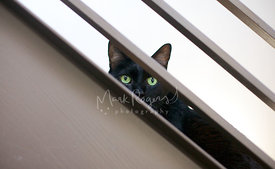 Black Cat Looking Through Stair Rails