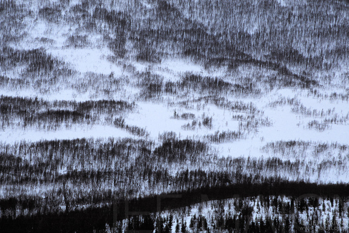 Pattern of trees on a hill
