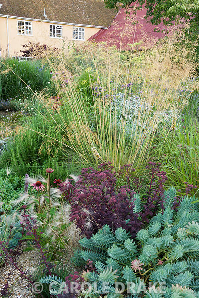 Striking combination of glaucous Euphorbia myrsinites with deep purple Sedum 'Purple Emperor'. Above dance the golden awns of Stipa gigantea and to left low growing Hordeum jubatum mingles with Echinacea 'Art's Pride'. Broughton Buildings, Broughton, nr Stockbridge, Hants, UK