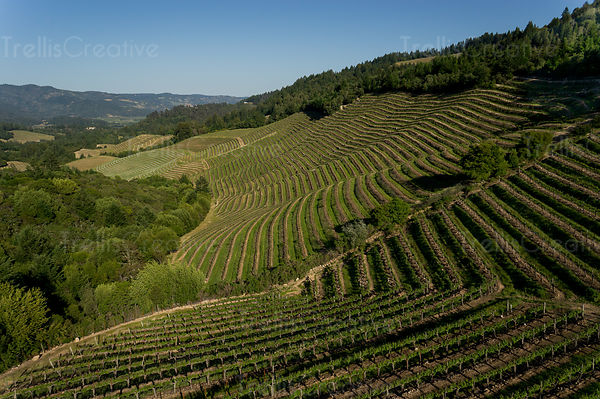 Aerial view of steep hillside vineyards in the Diamond Mountain appellation in Napa Valley