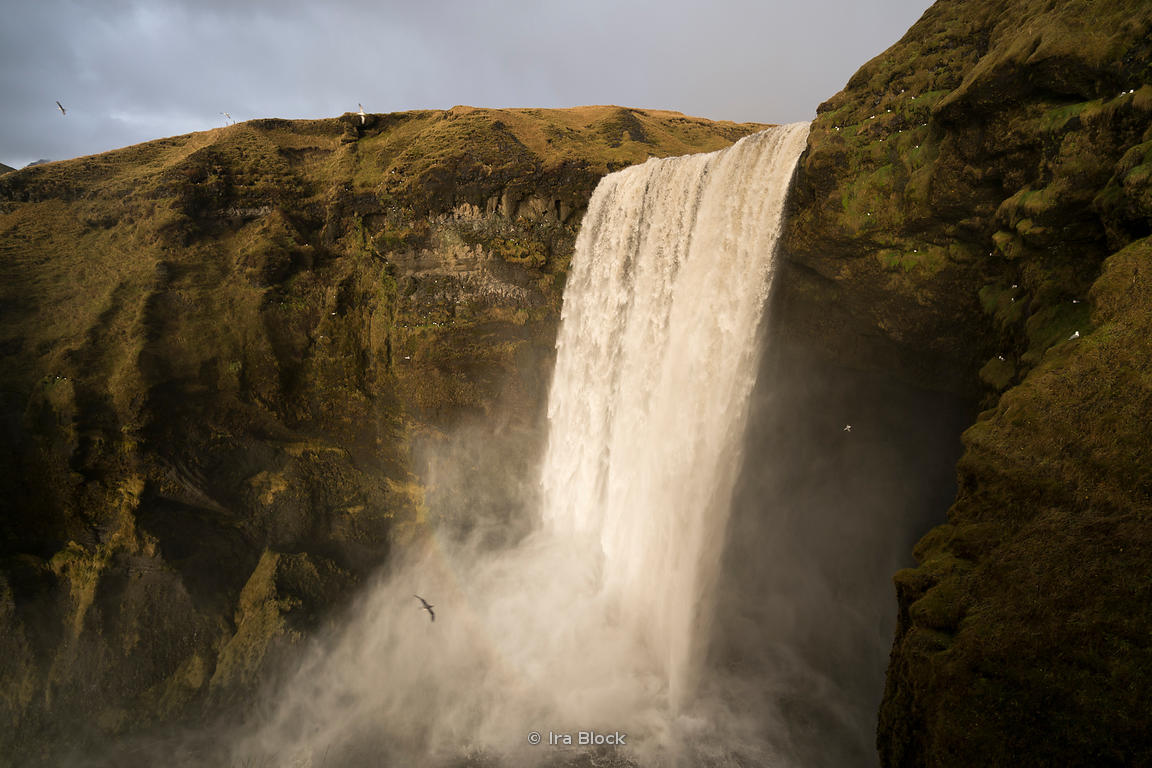 A bird flies past the Skogafoss Waterfalls on the Skógá River in the south of Iceland.