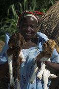 Smiling African woman holding two baby crossbred Boer goats, which grow a lot quicker and bigger than local goats,  eastern Uganda Africa