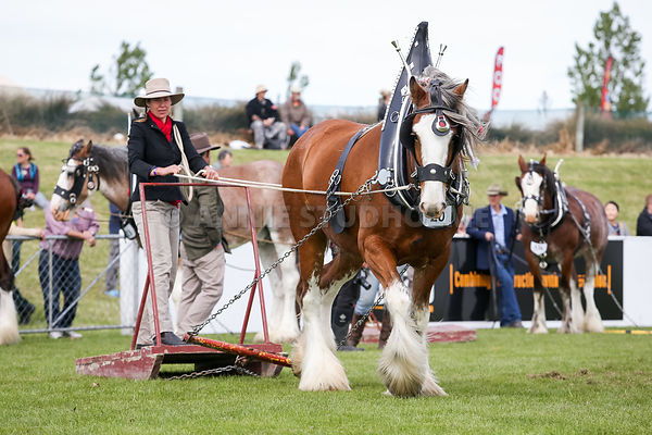 Clydesdales photos