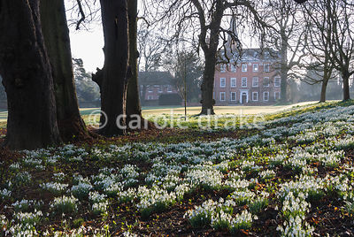 The pleasingly symmetrical facade of Welford's Queen Anne house, dating from 1702, seen beyond carpets of snowdrops and aconites below towering old limes that also date from the eighteenth century. Welford Park, Welford, Newbury, Berkshire, UK