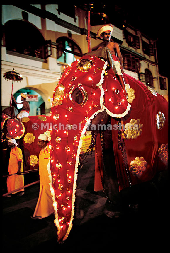 One hundred caparisoned elephants light up the night as the procession of penitents continues.