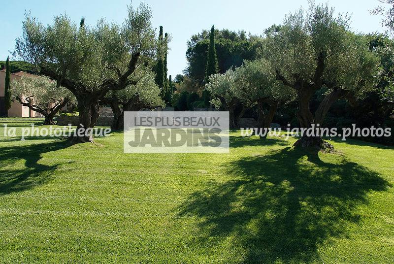 La phototh que les plus beaux jardins oliveraie dans for Conception jardin mediterraneen