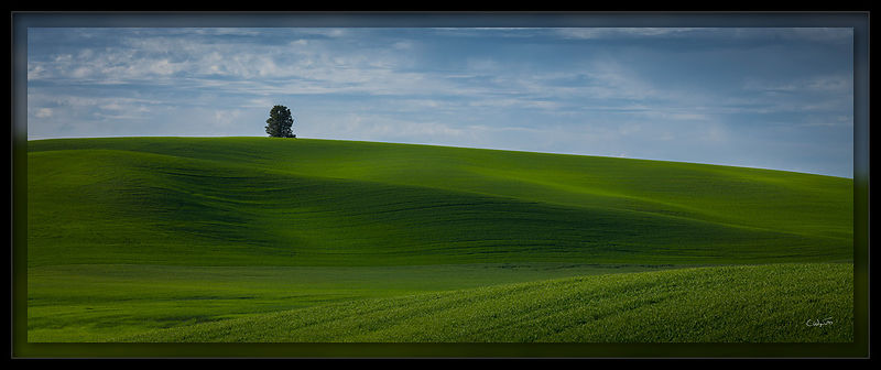 Perfect Palouse