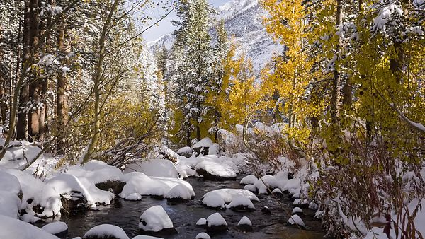 Close Up: Gold Trees & A Snowy Mountain Creek