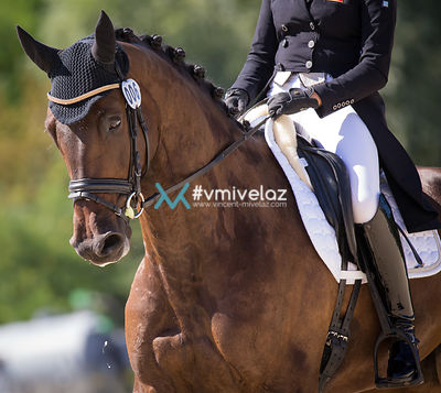 [Equissima] CIC2*: Dressage | 02.09.2016 photos