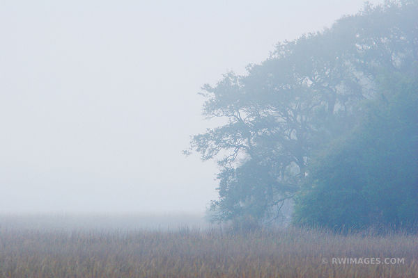 FOGGY MORNING HALF MOON BLUFF CUMBERLAND ISLAND GEORGIA COLOR