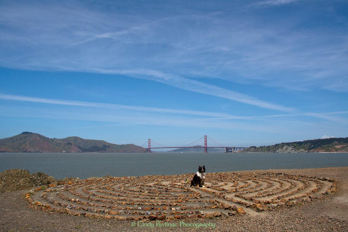 Merlin in Lands End Labyrinth, San Francisco